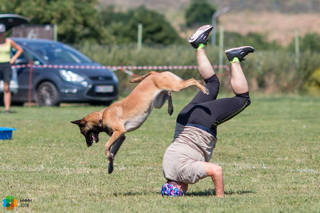 Dog Frisbee Competition Video